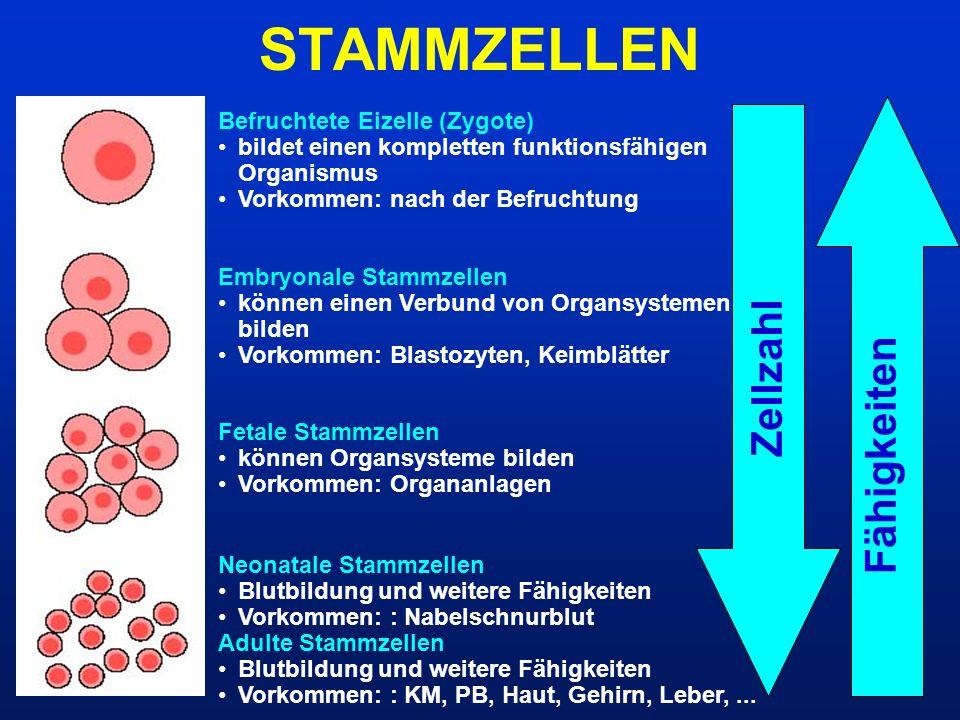 STAMMZELLEN Zellzahl Fähigkeiten Befruchtete Eizelle (Zygote) bildet einen kompletten funktionsfähigen Organismus Vorkommen: nach der Befruchtung Embr