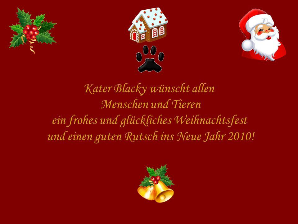 Kater Blacky wünscht allen Menschen und Tieren ein frohes und glückliches Weihnachtsfest und einen guten Rutsch ins Neue Jahr 2010!