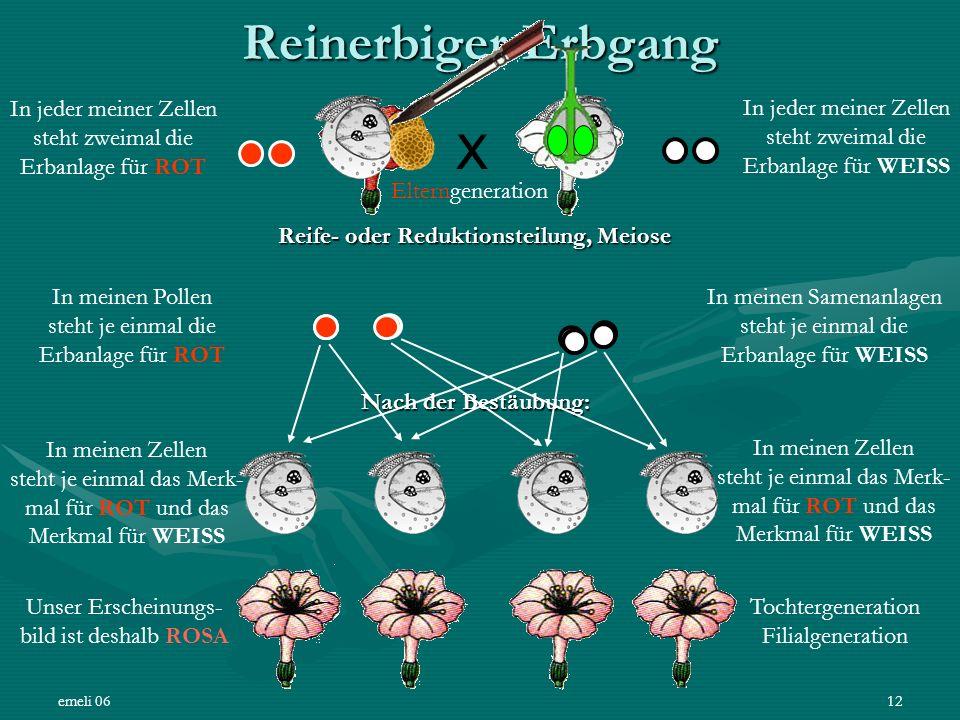 emeli 0612 Reinerbiger Erbgang X In jeder meiner Zellen steht zweimal die Erbanlage für WEISS In jeder meiner Zellen steht zweimal die Erbanlage für R