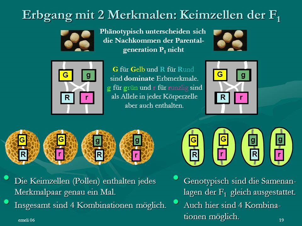 emeli 0619 Erbgang mit 2 Merkmalen: Keimzellen der F 1 Die Keimzellen (Pollen) enthalten jedes Merkmalpaar genau ein Mal. Die Keimzellen (Pollen) enth