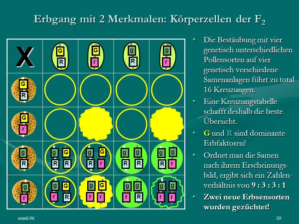 emeli 0620 Erbgang mit 2 Merkmalen: Körperzellen der F 2 X Die Bestäubung mit vier genetisch unterschiedlichen Pollensorten auf vier genetisch verschi