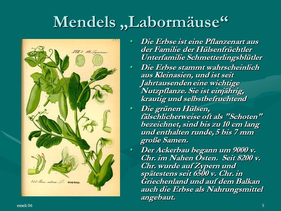 emeli 065 Mendels Labormäuse Die Erbse ist eine Pflanzenart aus der Familie der Hülsenfrüchtler Unterfamilie SchmetterlingsblütlerDie Erbse ist eine P