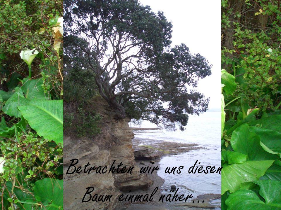 Betrachten wir uns diesen Baum einmal näher…