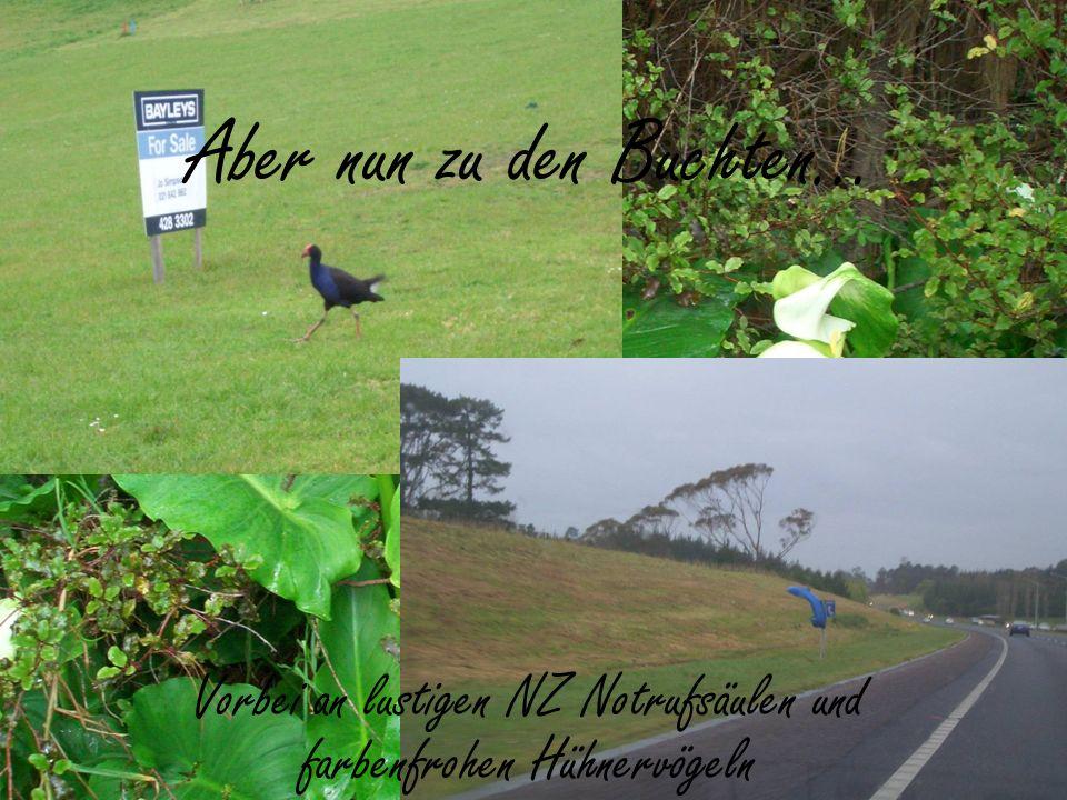 Aber nun zu den Buchten… Vorbei an lustigen NZ Notrufsäulen und farbenfrohen Hühnervögeln