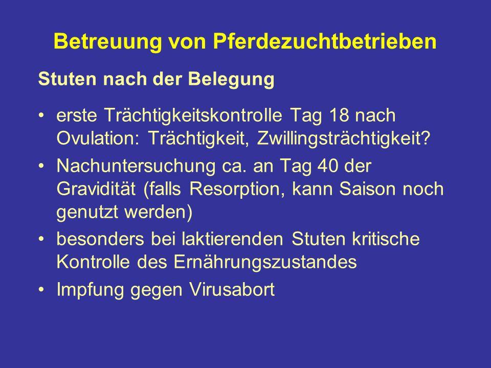 Betreuung von Pferdezuchtbetrieben Stuten nach der Belegung erste Trächtigkeitskontrolle Tag 18 nach Ovulation: Trächtigkeit, Zwillingsträchtigkeit.
