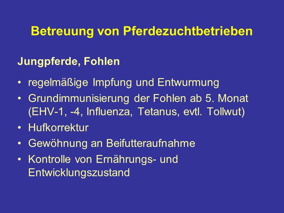 Betreuung von Pferdezuchtbetrieben Jungpferde, Fohlen regelmäßige Impfung und Entwurmung Grundimmunisierung der Fohlen ab 5.