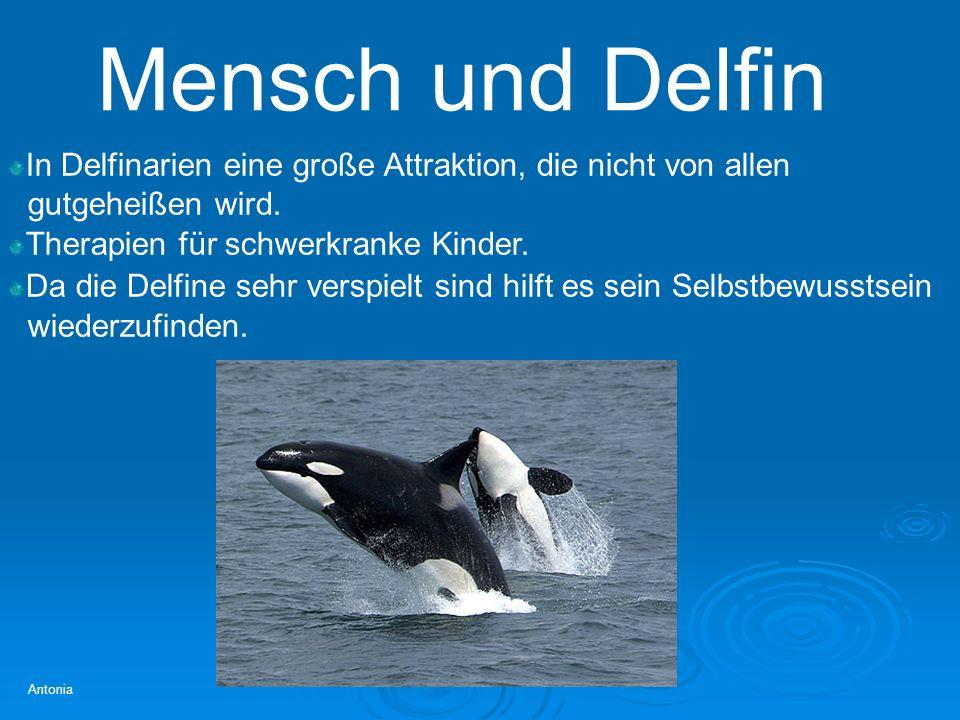 Mensch und Delfin Antonia In Delfinarien eine große Attraktion, die nicht von allen gutgeheißen wird. Therapien für schwerkranke Kinder. Da die Delfin