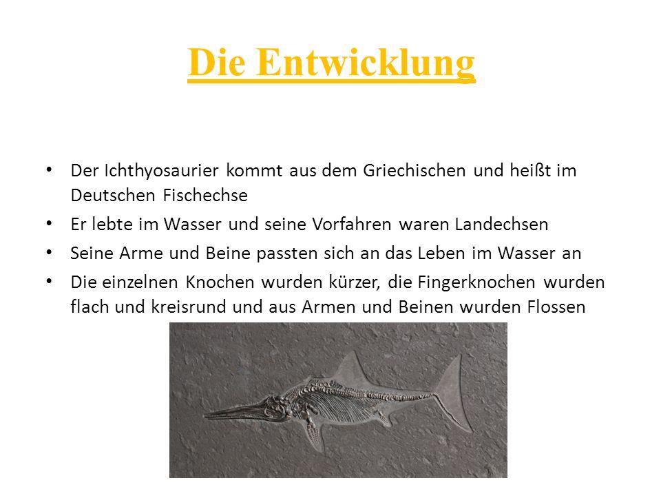 Die Entwicklung Der Ichthyosaurier kommt aus dem Griechischen und heißt im Deutschen Fischechse Er lebte im Wasser und seine Vorfahren waren Landechse