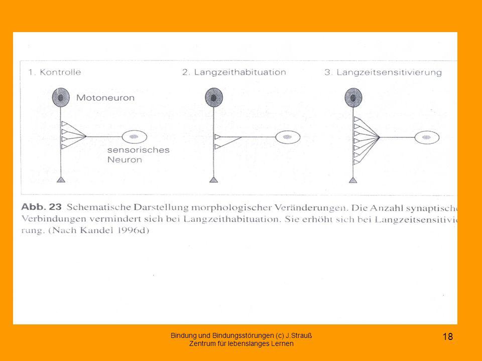 Bindung und Bindungsstörungen (c) J.Strauß Zentrum für lebenslanges Lernen 18