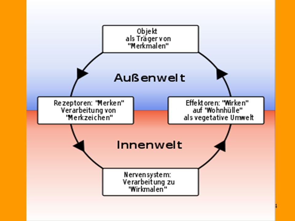 Funktionskreis (v. Uexküll) Bindung und Bindungsstörungen (c) J.Strauß Zentrum für lebenslanges Lernen 24