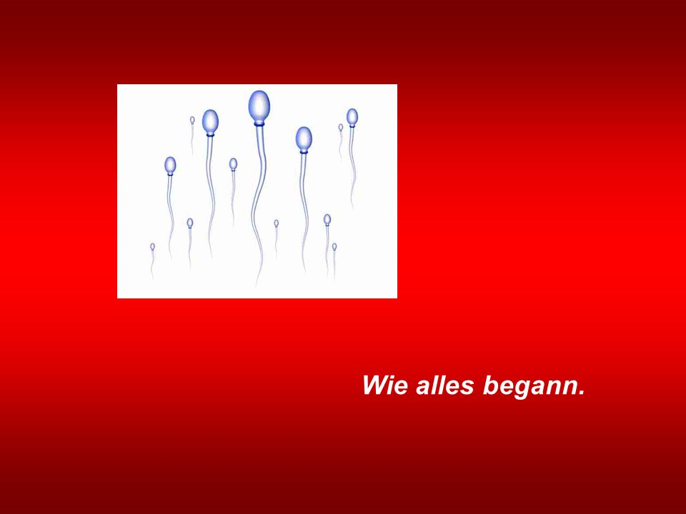 Wie alles begann.