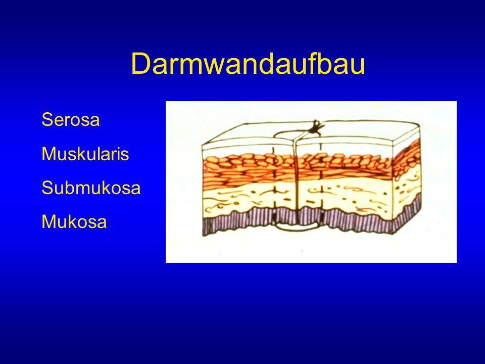 Darmwandaufbau Serosa Muskularis Submukosa Mukosa