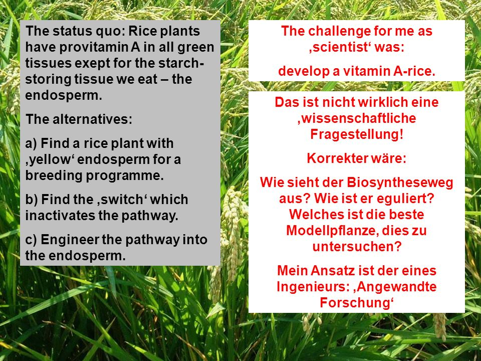 The challenge for me as scientist was: develop a vitamin A-rice.
