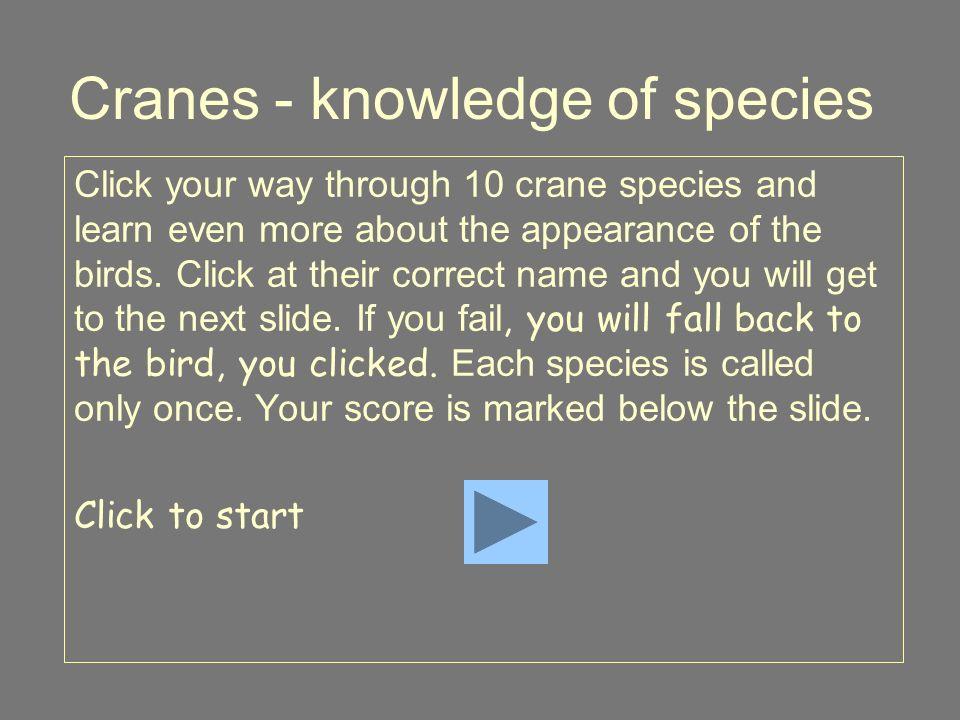 Sarus Crane 10