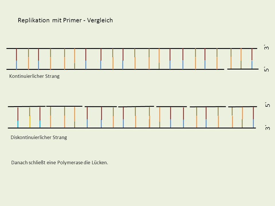 5` 3` 5` 3` Replikation mit Primer - Vergleich Kontinuierlicher Strang Diskontinuierlicher Strang Danach schließt eine Polymerase die Lücken.