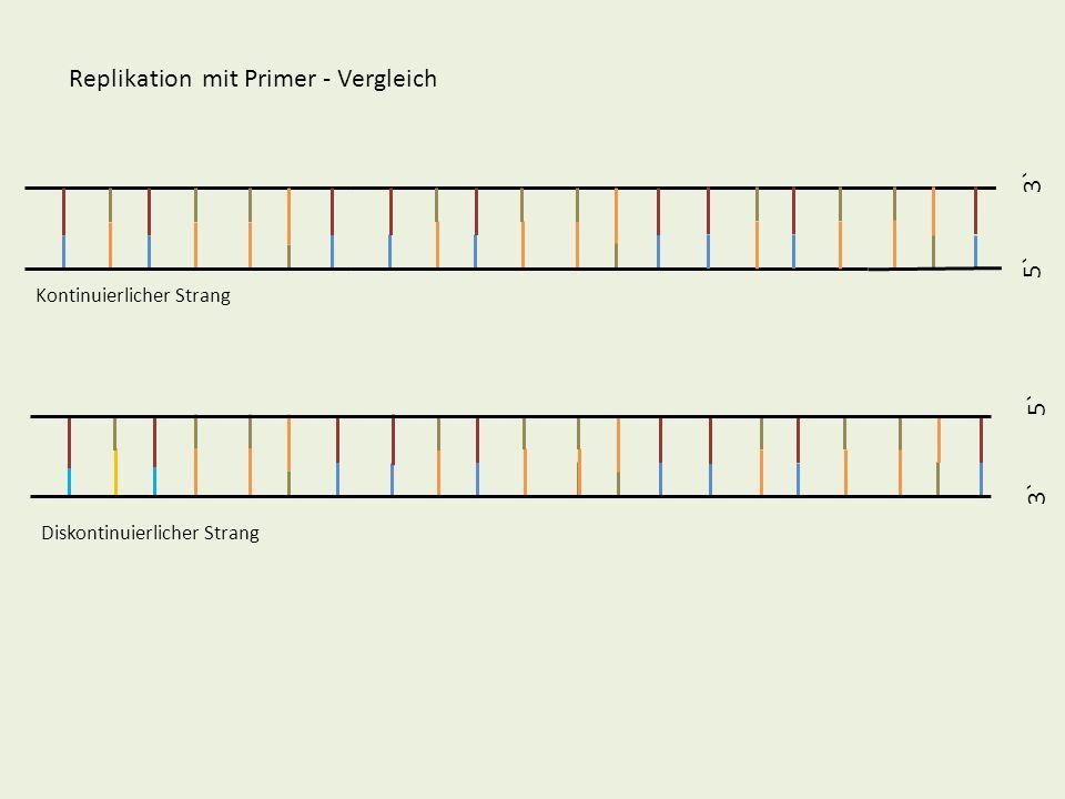 5` 3` 5` 3` Replikation mit Primer - Vergleich Kontinuierlicher Strang Diskontinuierlicher Strang