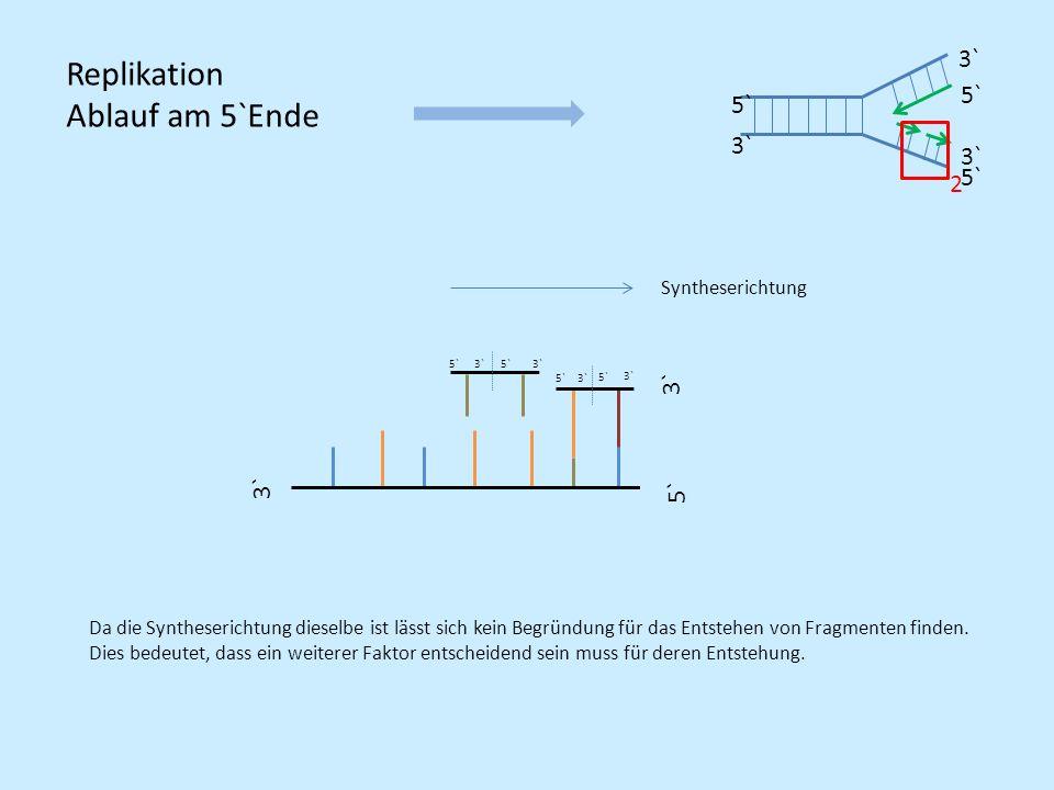 5` 3` 5` 3` 5` 3` Syntheserichtung 3` Da die Syntheserichtung dieselbe ist lässt sich kein Begründung für das Entstehen von Fragmenten finden. Dies be
