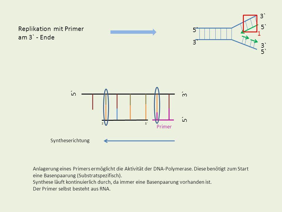 Replikation mit Primer am 3` - Ende 5` 3` 5` Syntheserichtung Primer Anlagerung eines Primers ermöglicht die Aktivität der DNA-Polymerase. Diese benöt