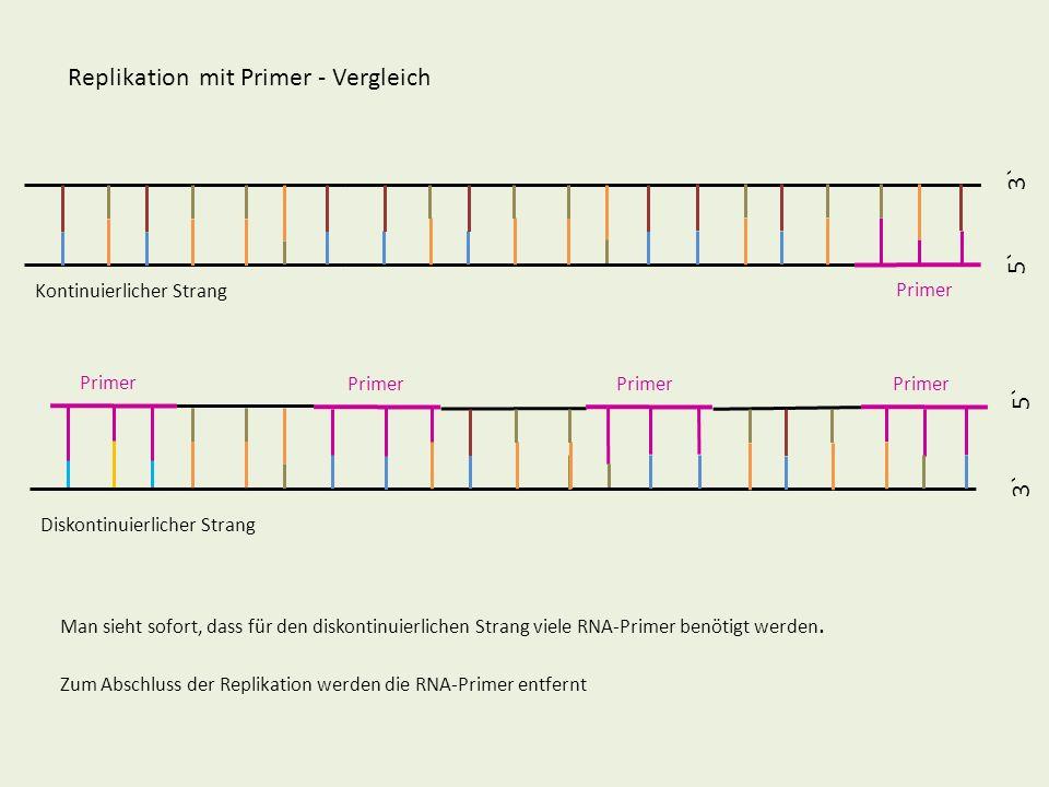 5` 3` 5` 3` Replikation mit Primer - Vergleich Kontinuierlicher Strang Diskontinuierlicher Strang Man sieht sofort, dass für den diskontinuierlichen S