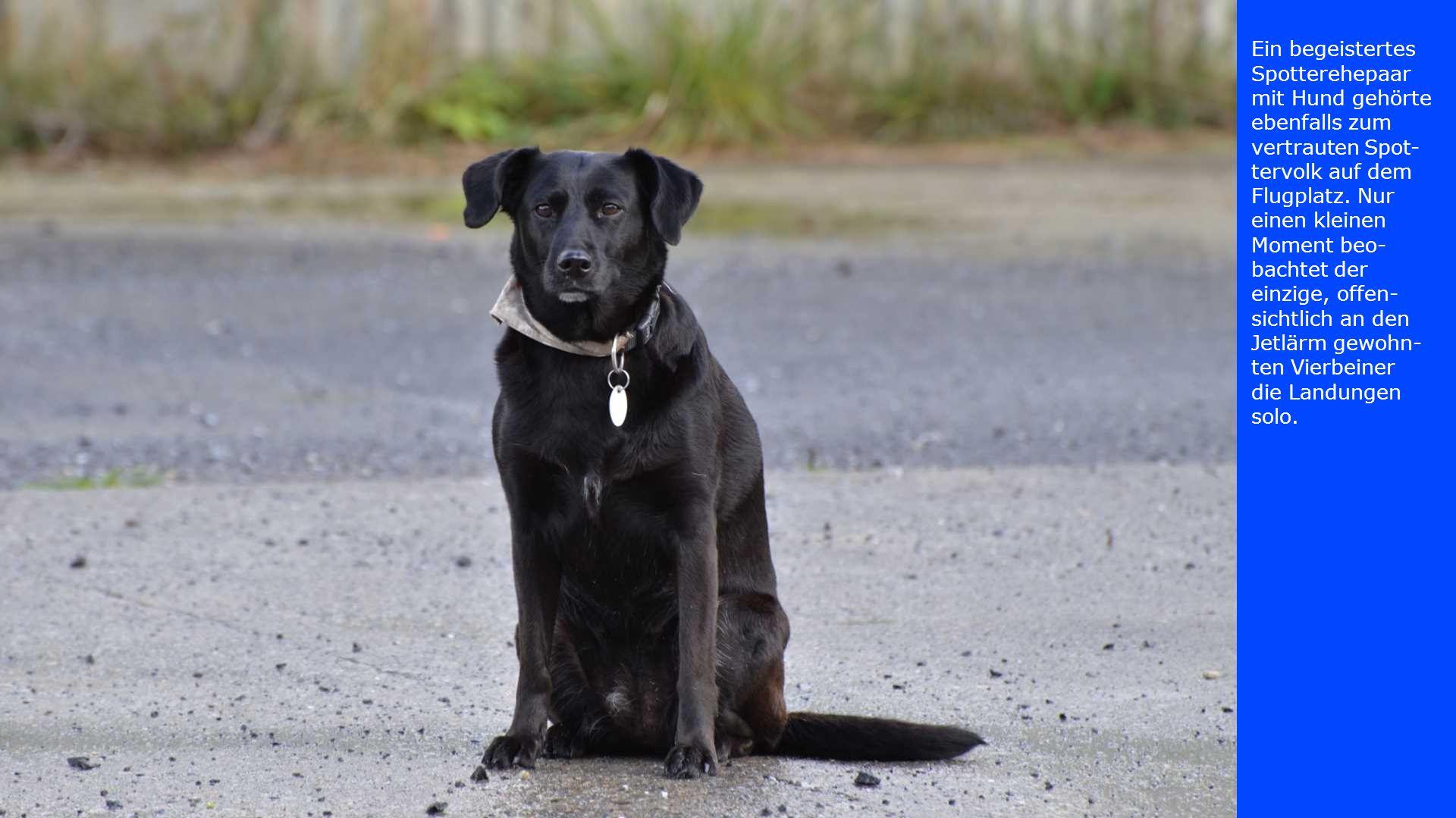 Ein begeistertes Spotterehepaar mit Hund gehörte ebenfalls zum vertrauten Spot- tervolk auf dem Flugplatz. Nur einen kleinen Moment beo- bachtet der e
