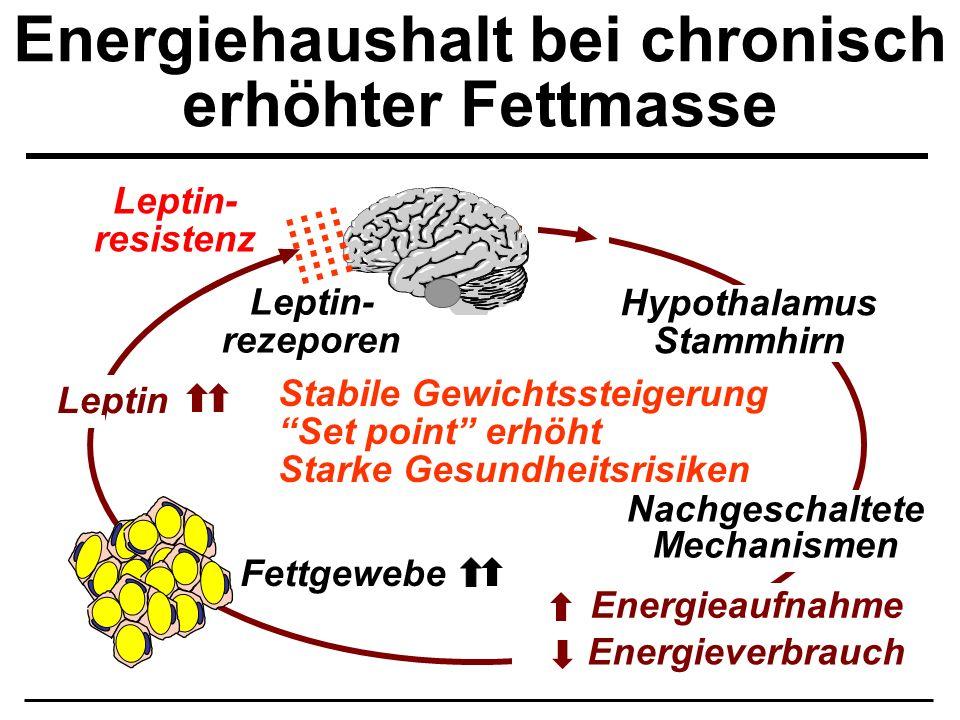 Energiehaushalt bei chronisch erhöhter Fettmasse Leptin Fettgewebe Energieverbrauch Energieaufnahme Leptin- resistenz Hypothalamus Stammhirn Nachgesch