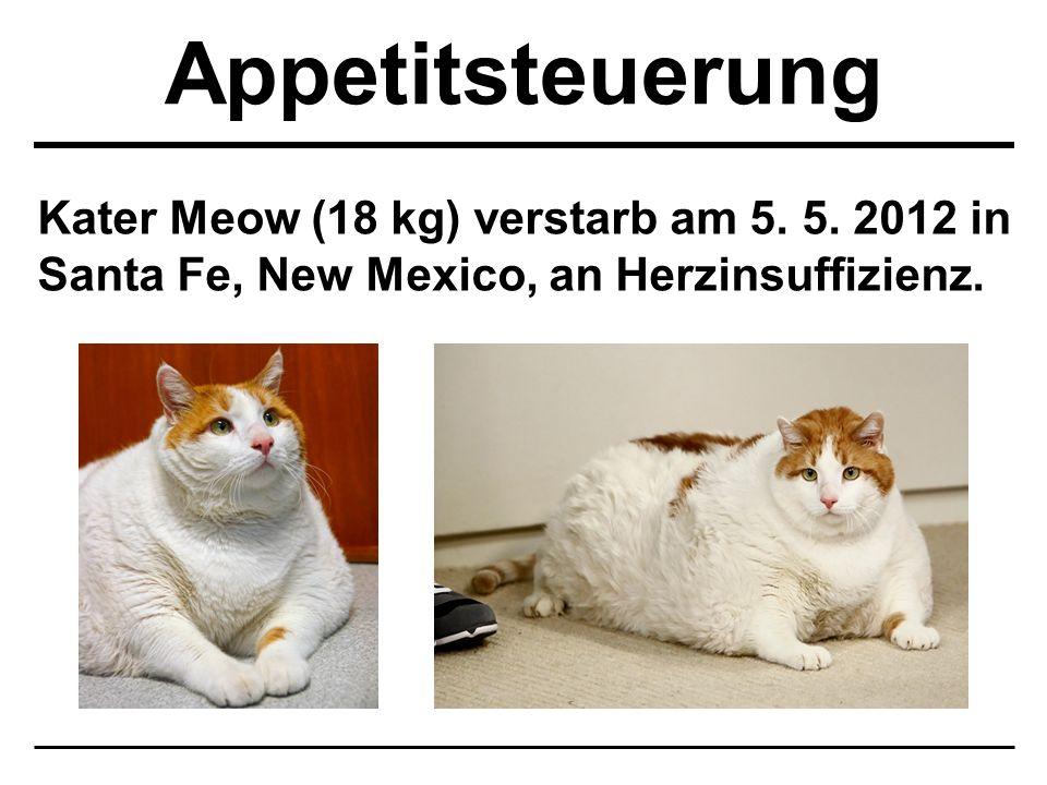Kater Meow (18 kg) verstarb am 5. 5. 2012 in Santa Fe, New Mexico, an Herzinsuffizienz.