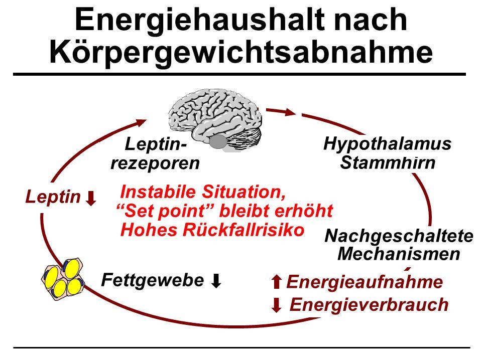 Energiehaushalt nach Körpergewichtsabnahme Leptin Fettgewebe Hypothalamus Stammhirn Energieverbrauch Energieaufnahme Nachgeschaltete Mechanismen Insta