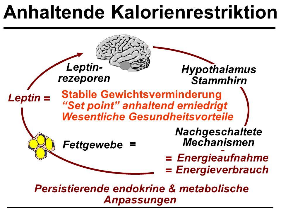 Anhaltende Kalorienrestriktion Leptin Fettgewebe Stabile Gewichtsverminderung Set point anhaltend erniedrigt Wesentliche Gesundheitsvorteile Hypothala