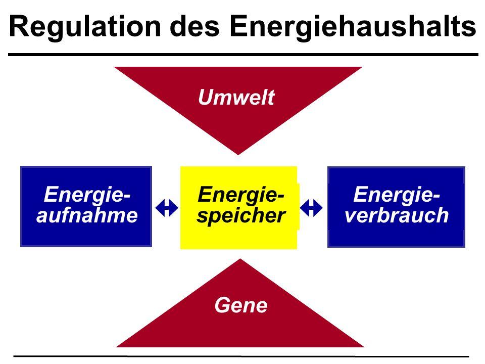 Regulation des Energiehaushalts Umwelt Gene Energie- verbrauch Energie- aufnahme Energie- speicher