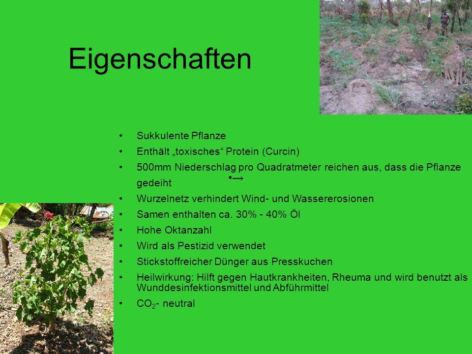 Eigenschaften Sukkulente Pflanze Enthält toxisches Protein (Curcin) 500mm Niederschlag pro Quadratmeter reichen aus, dass die Pflanze gedeiht Wurzelnetz verhindert Wind- und Wassererosionen Samen enthalten ca.