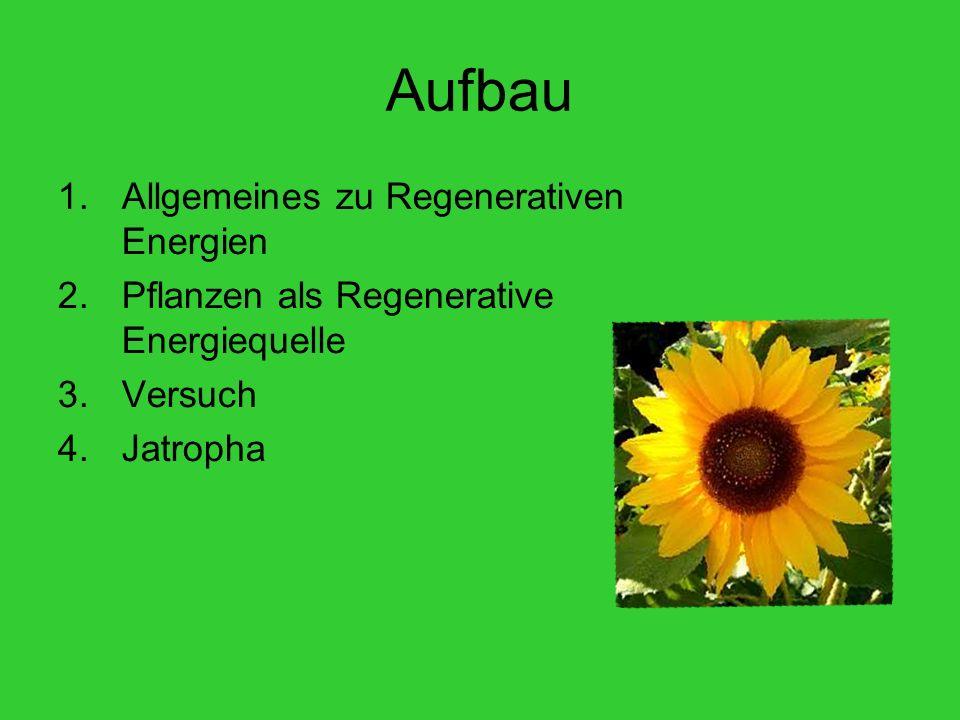 Aufbau 1.Allgemeines zu Regenerativen Energien 2.Pflanzen als Regenerative Energiequelle 3.Versuch 4.Jatropha