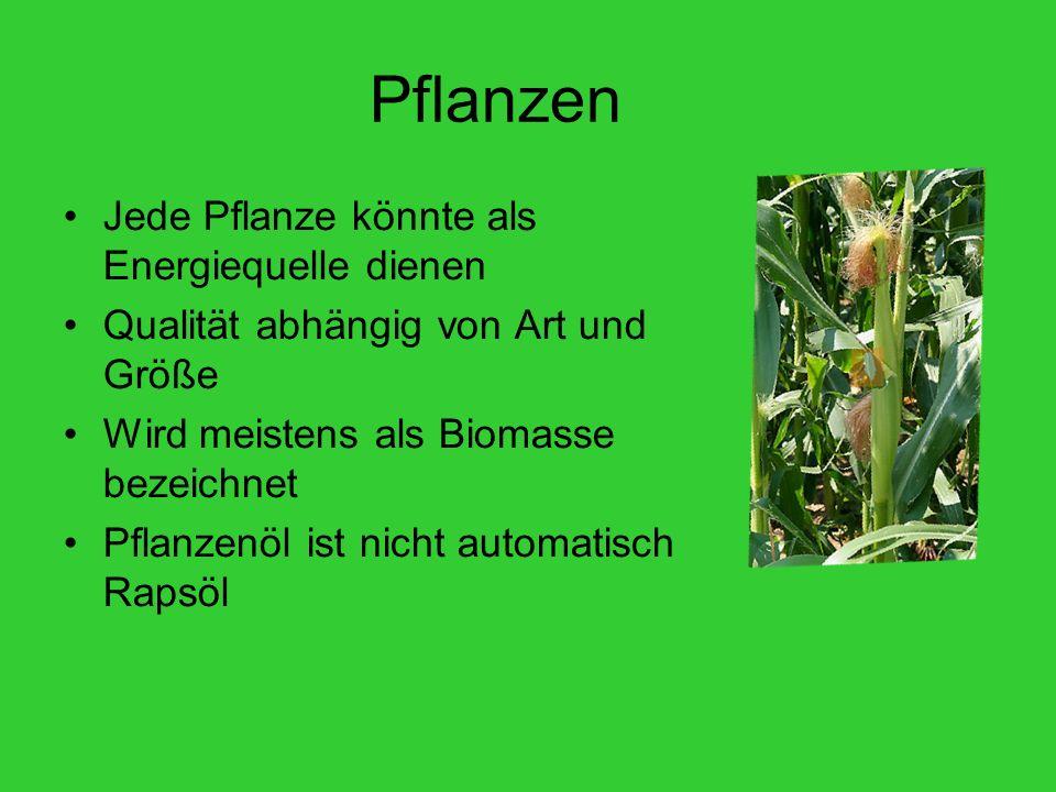 Pflanzen Jede Pflanze könnte als Energiequelle dienen Qualität abhängig von Art und Größe Wird meistens als Biomasse bezeichnet Pflanzenöl ist nicht automatisch Rapsöl