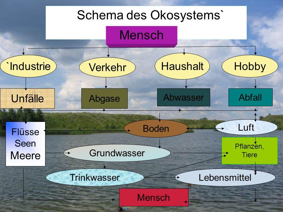 Schema des Okosystems` `Industrie Verkehr Hobby Haushalt Mensch Unfälle Flüsse Seen Meere Boden Luft Grundwasser TrinkwasserLebensmittel Mensch Pflanz