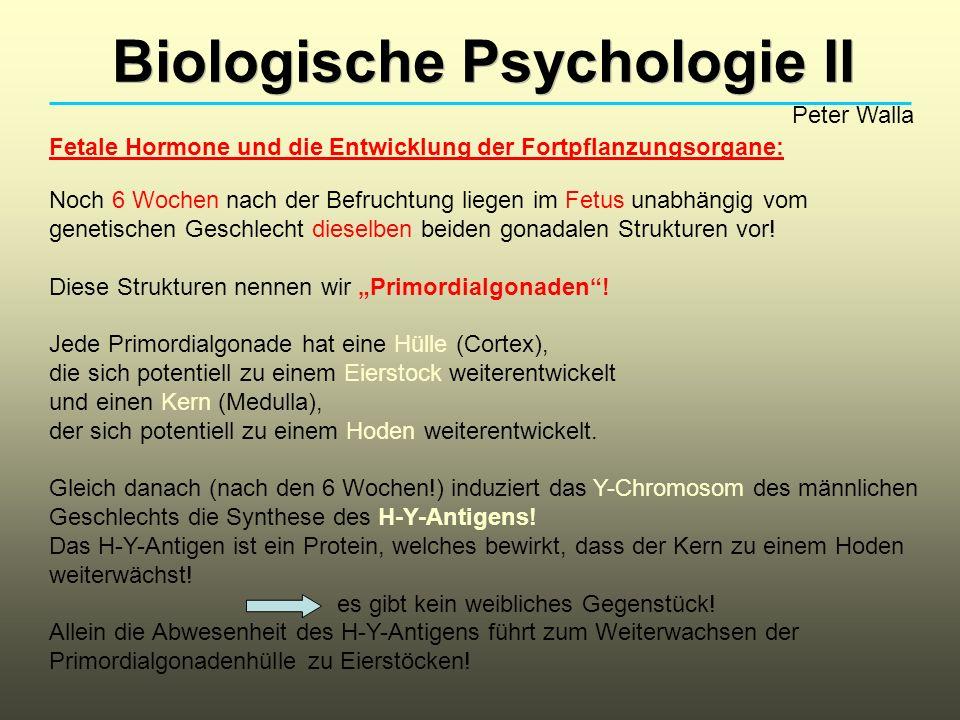 Biologische Psychologie II Peter Walla Es ist möglich, durch Injektion des H-Y-Antigens bei einem genetisch weiblichen Fetus die Entwicklung von Hoden zu induzieren.