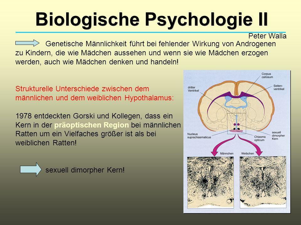 Biologische Psychologie II Peter Walla Genetische Männlichkeit führt bei fehlender Wirkung von Androgenen zu Kindern, die wie Mädchen aussehen und wenn sie wie Mädchen erzogen werden, auch wie Mädchen denken und handeln.