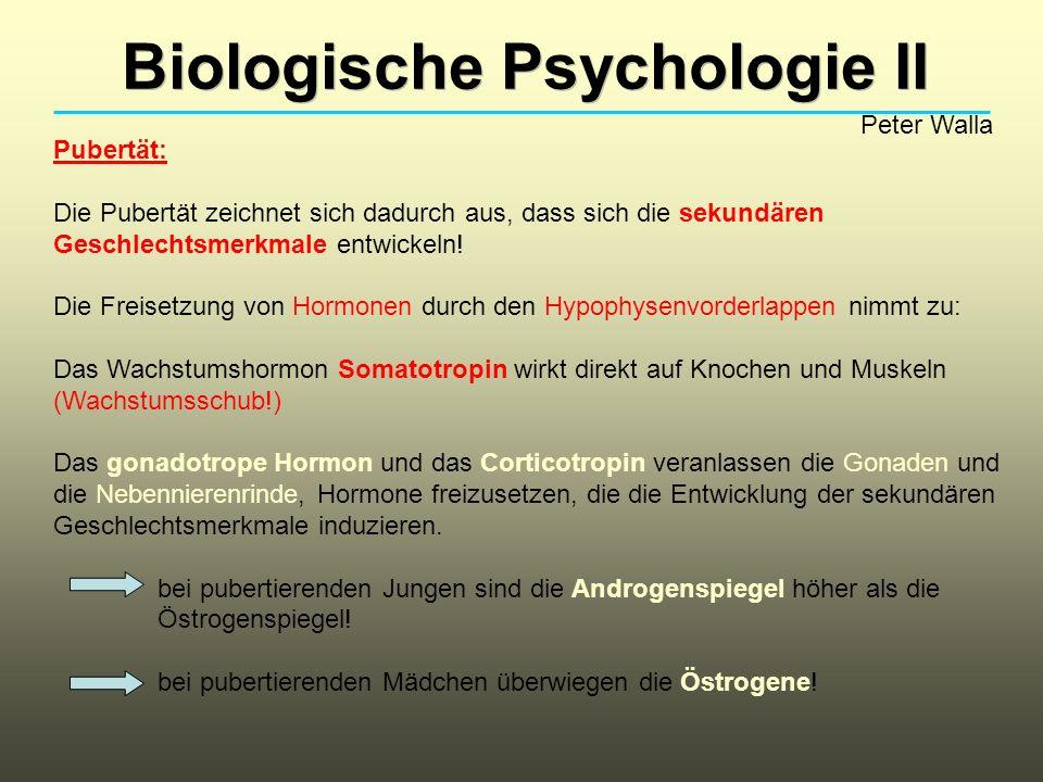 Biologische Psychologie II Peter Walla Pubertät: Die Pubertät zeichnet sich dadurch aus, dass sich die sekundären Geschlechtsmerkmale entwickeln.
