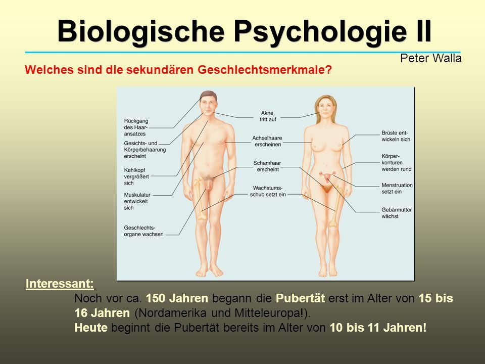 Biologische Psychologie II Peter Walla Welches sind die sekundären Geschlechtsmerkmale.