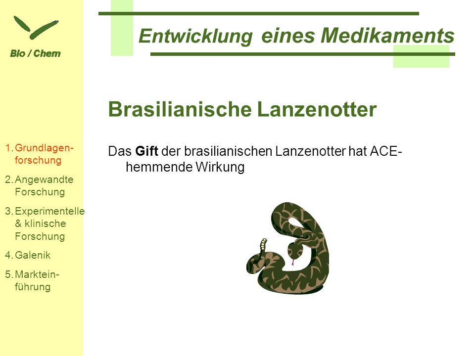 Entwicklung eines Medikaments Brasilianische Lanzenotter Das Gift der brasilianischen Lanzenotter hat ACE- hemmende Wirkung 1.Grundlagen- forschung 2.