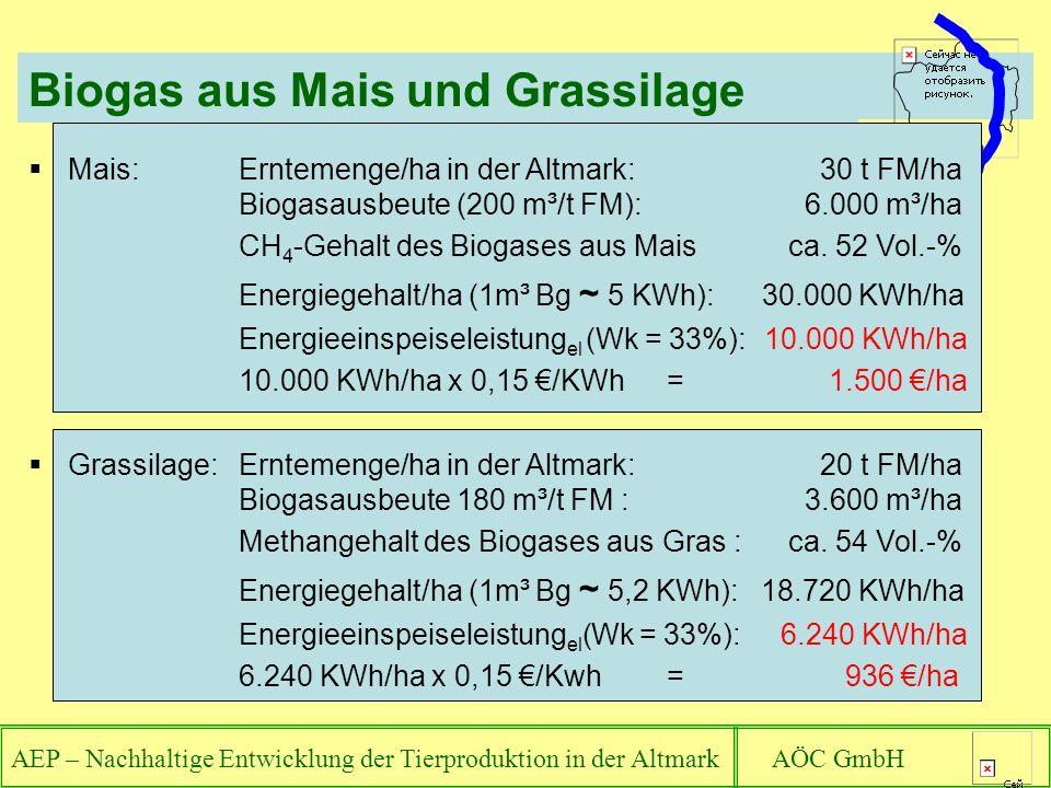 AEP – Nachhaltige Entwicklung der Tierproduktion in der Altmark AÖC GmbH Biogas aus Mais und Grassilage Mais: Erntemenge/ha in der Altmark: 30 t FM/ha Biogasausbeute (200 m³/t FM): 6.000 m³/ha CH 4 -Gehalt des Biogases aus Mais ca.