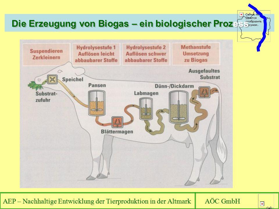 AEP – Nachhaltige Entwicklung der Tierproduktion in der Altmark AÖC GmbH Die Erzeugung von Biogas – ein biologischer Prozess AEP – Nachhaltige Entwicklung der Tierproduktion in der Altmark AÖC GmbH