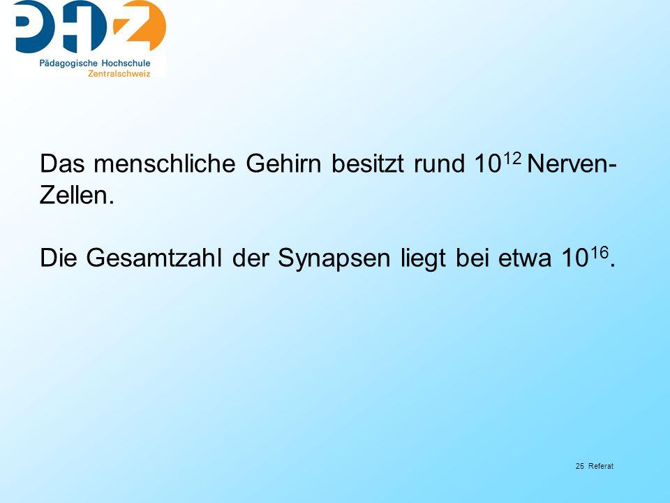 25 Referat Das menschliche Gehirn besitzt rund 10 12 Nerven- Zellen. Die Gesamtzahl der Synapsen liegt bei etwa 10 16.