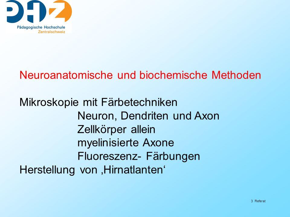 3 Referat Neuroanatomische und biochemische Methoden Mikroskopie mit Färbetechniken Neuron, Dendriten und Axon Zellkörper allein myelinisierte Axone F