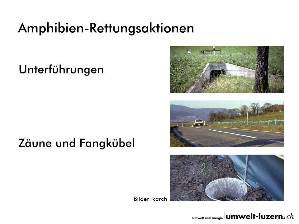 Amphibien-Rettungsaktionen Unterführungen Zäune und Fangkübel Bilder: karch