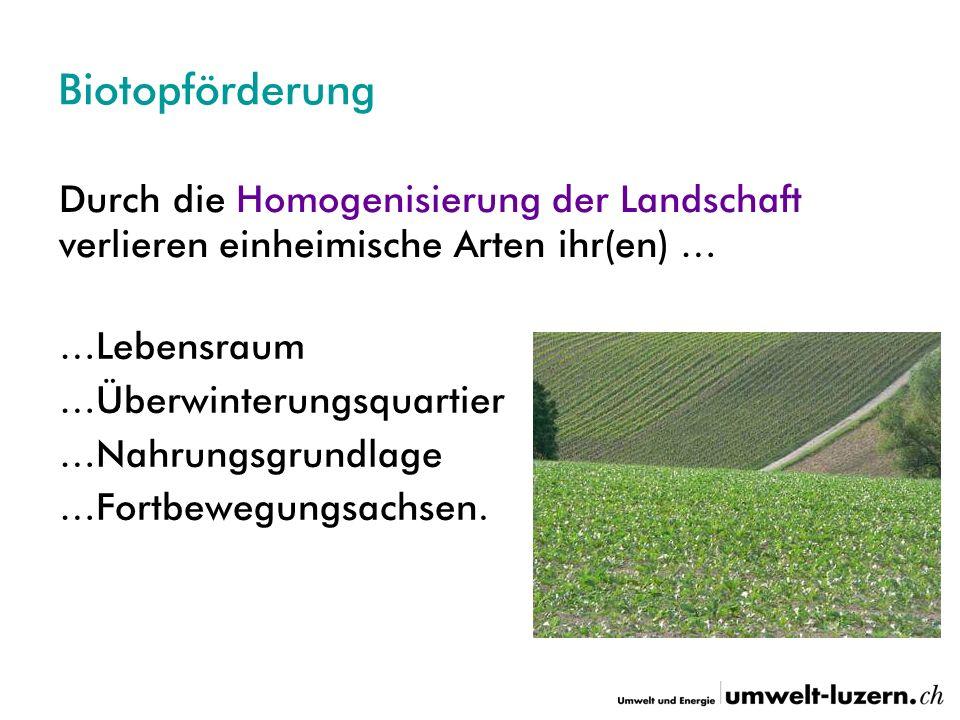 Biotopförderung Durch die Homogenisierung der Landschaft verlieren einheimische Arten ihr(en) … …Lebensraum …Überwinterungsquartier …Nahrungsgrundlage