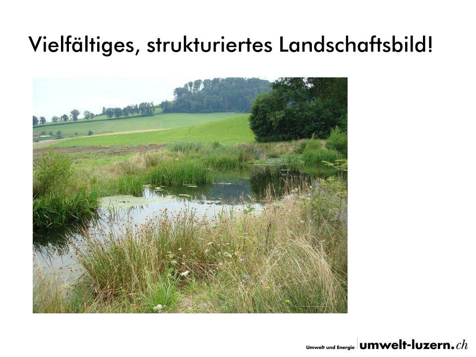 Vielfältiges, strukturiertes Landschaftsbild!