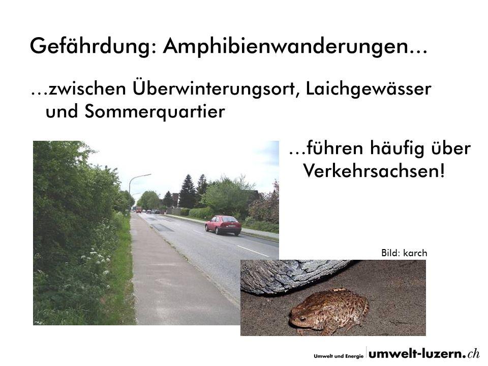 Gefährdung: Amphibienwanderungen... …zwischen Überwinterungsort, Laichgewässer und Sommerquartier …führen häufig über Verkehrsachsen! Bild: karch