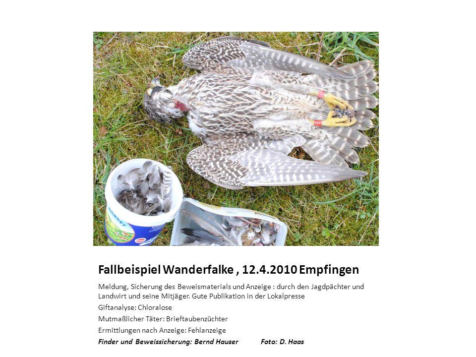 Fallbeispiel Wanderfalke, 12.4.2010 Empfingen Meldung, Sicherung des Beweismaterials und Anzeige : durch den Jagdpächter und Landwirt und seine Mitjäger.