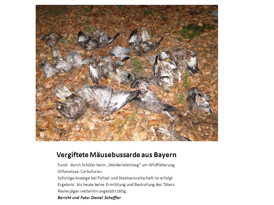 Vergiftete Mäusebussarde aus Bayern Fund: durch Schüler beim Walderlebnistag um Wildfütterung Giftanalyse: Carbofuran Sofortige Anzeige bei Polizei und Staatsanwaltschaft ist erfolgt Ergebnis: bis heute keine Ermittlung und Bestrafung des Täters.
