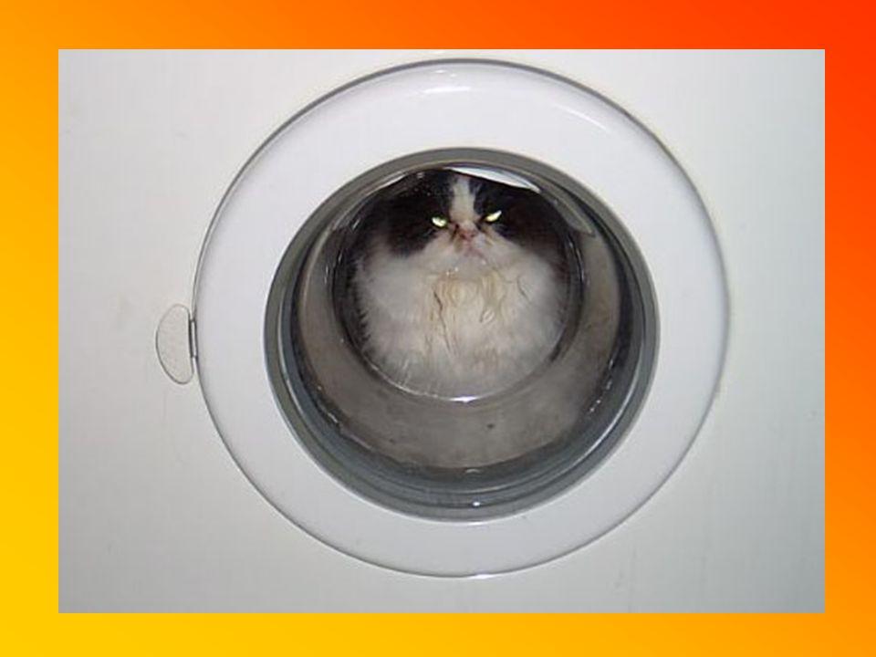 Weiterhin Siebzehnter Tag Wieder daheim. Endlich weiß ich auch wo meine Katze steckt.