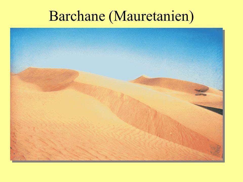 Barchane (Mauretanien)